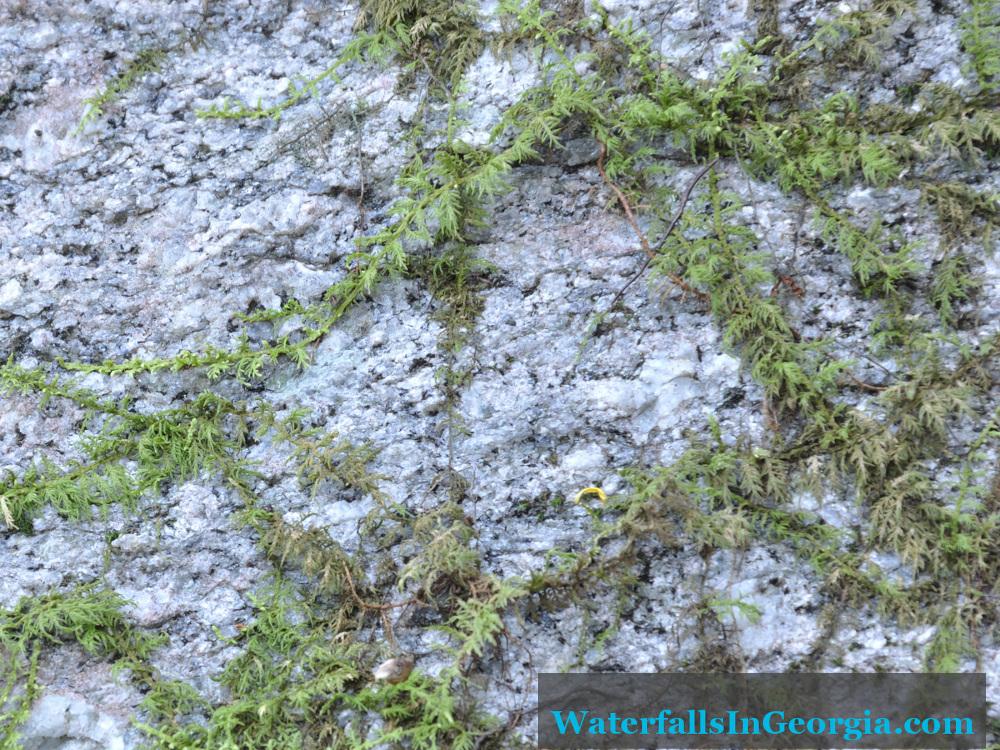 Moss on granite at Upper Estatoah Falls
