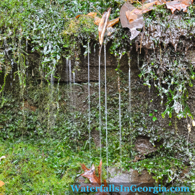 Bad Branch Falls moss_web